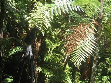 Auckland Domain - The Fernery