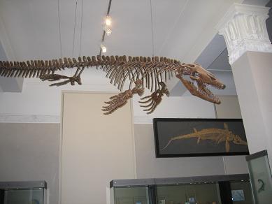 Auckland Museum - Origins