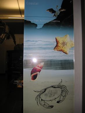 Auckland Museum - Coastal