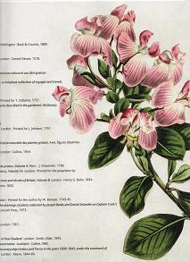 Flowers, Fruit and Foliage pamphlet part 3